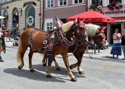 Vorbereitungen für den Festumzug: Die Pferde werden zum Startpunkt gebracht.